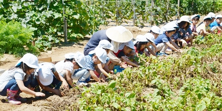 ジャガイモ掘り(みんな並んで)2