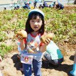 ジャガイモ掘り2