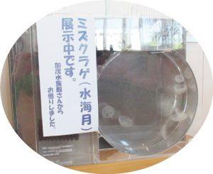 加茂水族館水クラゲ